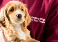 A New Leash on Life – Hearing Dogs for Deaf People